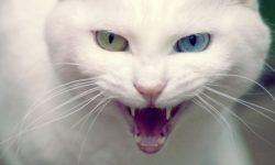 Бешенство у кошек и котов: как предотвратить смертельный вирус