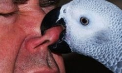 Как отучить попугая кусаться - проверенные способы