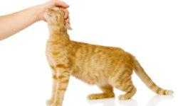 Кошка кусается, когда ее гладишь: почему и что делать