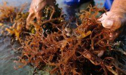 Избавление бурых водорослей в аквариуме: методы борьбы и профилактика