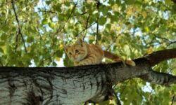 Как снять кота с дерева, какая служба поможет и сколько это стоит?