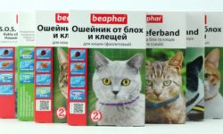 Ошейники для кошек [от блох, декоративные]: отзывы, своими руками