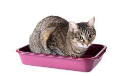 4 причины, почему кошка начала гадить где попало: что делать и как отучить
