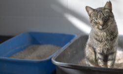Как приучить кота к лотку - практические советы