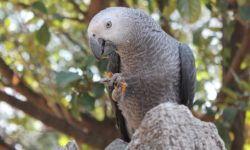 Что делать, если попугай сломал себе лапку?