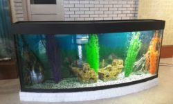 ЗелАква: особенности, виды и характеристики зеленоградских аквариумов
