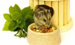 Чем кормить джунгарского хомяка домашних условиях, что едят джунгарики, таблица питания (список: что можно и нельзя)