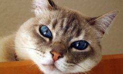 Аллергия у кошек: симптомы, правильное питание, истории владельцев