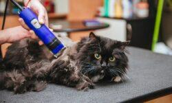 Стресс у кошки после стрижки: почему животное ведет себя странно и не может лечь?