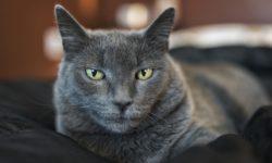 4 причины, почему кот метит в доме - что делать