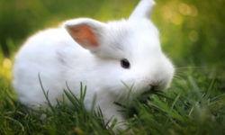 Имена кроликов девочек
