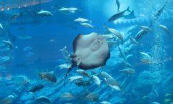 Самый большой океанариум в мире: зачем он нужен и где находится, хорошие морские музеи Европы