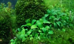 Диатомовые водоросли: примеры и виды организмов, их среда обитания, размножение