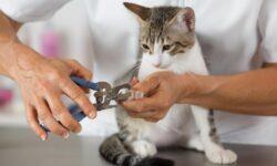 Как подстричь когти кошке в домашних условиях: какие инструменты использовать?
