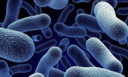 Нитрифицирующие бактерии: предназначение, среда обитания и использование нитрификаторов в различных сферах