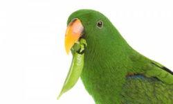 Сколько попугаи могут прожить без еды и воды, от чего это зависит