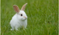 Имена кроликов мальчиков
