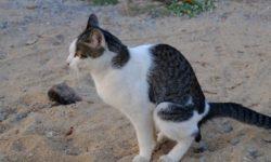 Кровь в кале у кота: [ 14 причин и Что делать ]