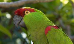Сколько живут попугаи в домашних условиях и на воле
