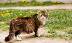 4 признаки беременности у кошки в первые дни