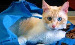 Переноска для кошек как выбрать: пластиковая, тканевая,клетка что лучше