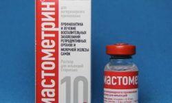 Мастометрин: инструкция по применению в ветеринарии, дозировка для кошек и собак, побочные действия