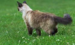 У кошки выделения из заднего прохода - какие бывают и почему