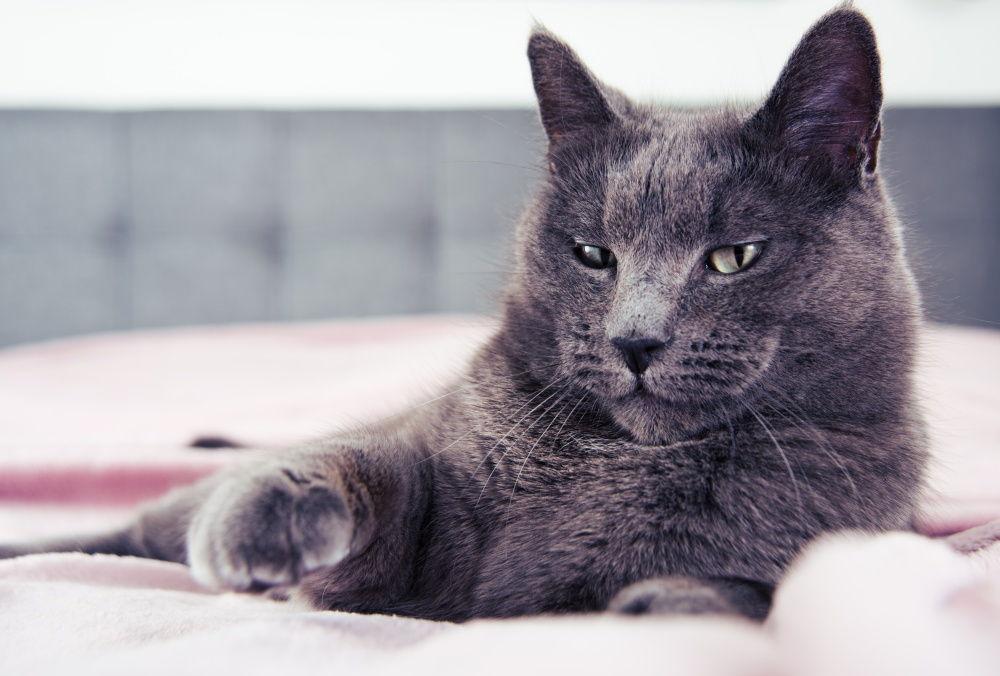 Норма креатинина в моче у кошек