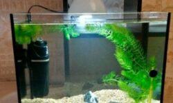 Аквариум на 30 литров: сколько рыбок можно содержать, какие аквариумные рыбки подойдут, оборудование, оформление