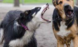 Болезнь Ауески у собак: симптомы и причины возникновения, пути передачи и особенности лечения, профилактика
