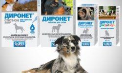 Диронет для собак: инструкция по применению, показания и побочные действия, срок хранения
