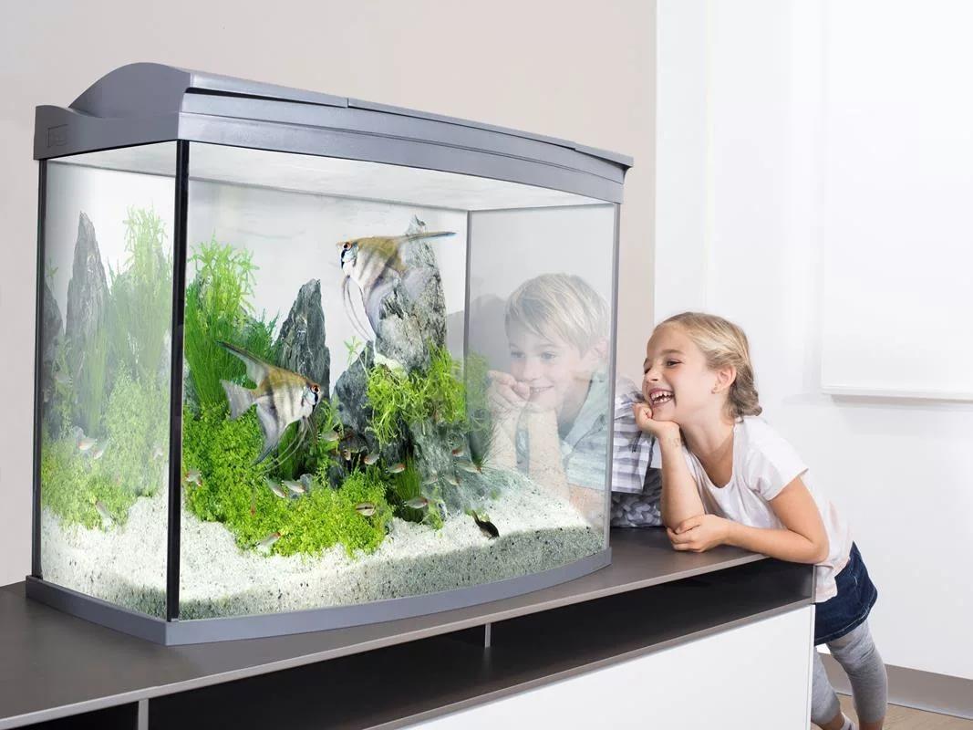 Как правильно выбрать аквариум для дома?