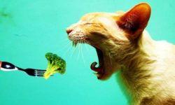 Рвота у кота. Кошку рвет белой пеной, желчью, кровью: ЧТО ДЕЛАТЬ