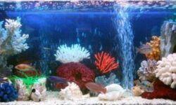 Компрессоры для аквариума (аквариумный аэратор) для рыб: как правильно установить, для чего, как выбрать