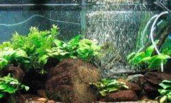Аэрация в аквариуме (кислород, воздух): что такое и для чего нужен, подача воздуха для рыбок, своими руками (как сделать), нужна ли, способы (растения, улитки, компрессоры, распылители, фильтр, помпа, шланг, распылитель), без электричества (перекись водорода, таблетки, оксидаторы, озонирование), норма содержания, избыток
