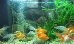 Бесшумный компрессор для аквариума: виды, своими руками, модели, установка, для больших и небольших аквариумов, как пользоваться