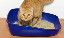 Наполнитель для кошачьего туалета: древесный, комкующийся, силикагелевый и другие