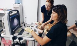"""Центр ветеринарной диагностики и малоинвазивной хирургии """"Траст Вет"""""""