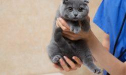 10 методов как отвадить котов метить дверь