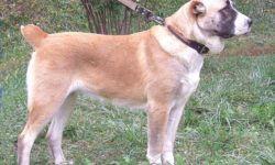 Власоеды у собак на шерсти: симптомы и лечение, диагностика и профилактика