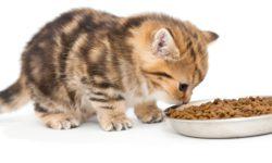 Корм для котят - какой самый лучший, обзор