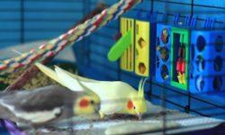 Почему попугай ест свой помет: основные причины поведения