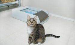 Кот не может пописать [пошагово что делать и профилактика]