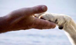 """Как научить собаку давать лапу: учим команду """"Дай лапу"""", программа от кинолога"""