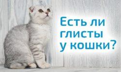 Глисты у кошек: Топ 10 средств 2018 года (таблетки, капли, народные)