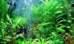 Компрессор для аквариума своими руками из подручных средств: как сделать водушный аэратор, распылитель, материалы, инструкция, принцип работы