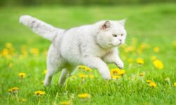 6 методов, как успокоить кошку когда она просит кота в домашних условиях