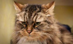 Гамавит для кошек - инструкция по применению, дозировка, способ применения, цена