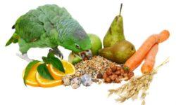 Витамины для попугаев | Какие витамины полезней всего вашей птичке