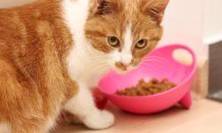 Чем кормить беременную кошку - 4 принципы кормления